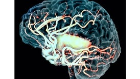 Gene in Infamous Experiment on Embryos Points to New Stroke Treatment