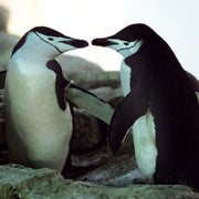 Bisexual Species: Unorthodox Sex in the Animal Kingdom