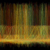 HONORABLE MENTION: COMPLEX RHYTHM SUSTAINING COMPLEX LIFE