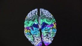 3D Brain Map Points Way to Future Discovery