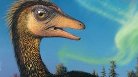 Dinosaurs of the Arctic Thrived in Cold Darkness