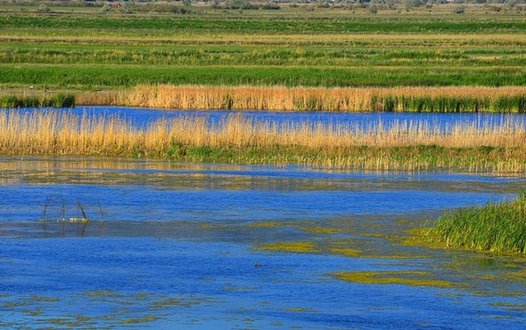 Wetlands Can Help Fight Climate Change
