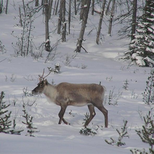 Researcher Sees Biological Regime Change Under Way in Alaska
