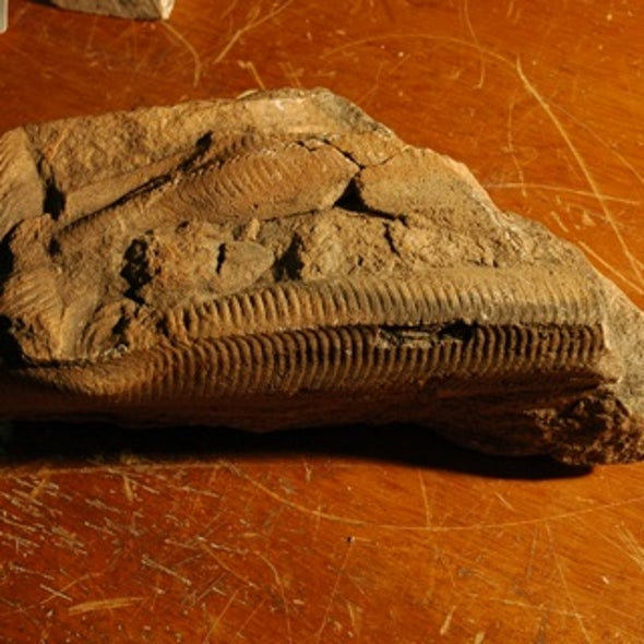 Bizarre Fossil Organisms Likely Absorbed Nutrients through Their Skin