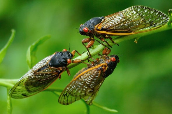 Brood X Cicadas Could Cause a Bird Baby Boom