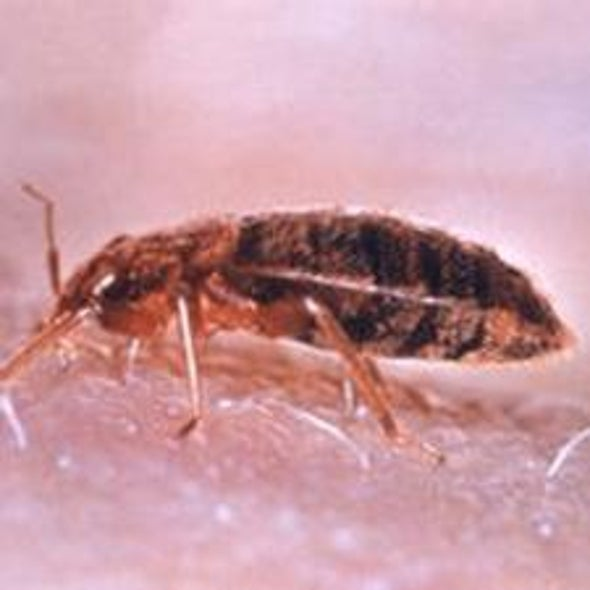 What Are Bedbugs? Are They Dangerous? [Re-post]