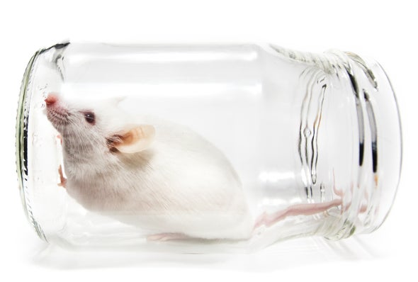 Squeaky Clean Mice Could Be Ruining Research