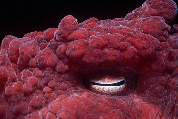 See the Most Bizarre and Beautiful Animal Eyes on Earth