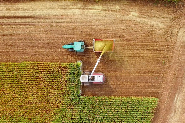 Climate Change Sets a Drought Trap for U.S. Corn