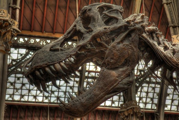 How I Dissected a <i>T. Rex</i> [Video]