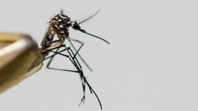 Second Case of Zika in Florida May Have Come from Local Mosquitoes