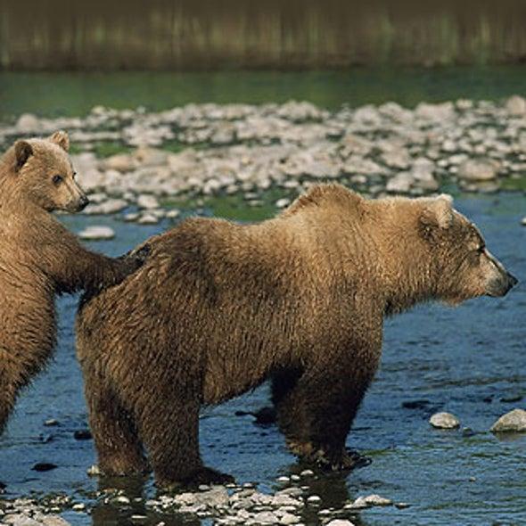 McCain's Beef with Bears?—Pork