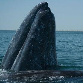 pacific ocean dangerous animals  Pacific Ocean Fish In the