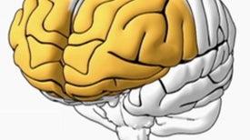 Memory in the Brain [Interactive]