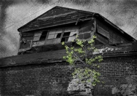 tree grows in front of abandoned building