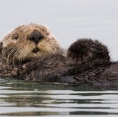 FUNCTION-FIRST WINNER: SEA OTTER