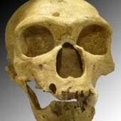 10. Neandertal Genome Decoded