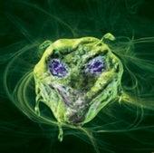 COVER OF SCIENTIFIC AMERICAN, DEC. 07