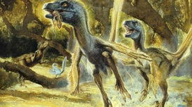 Dinosaur Feathers Came before Birds and Flight