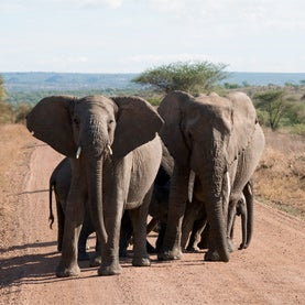 Why Elephant Poachers Love the Federal Budget Sequester