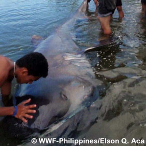 What is a megamouth shark? Is it still a scientific mystery?