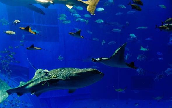 Astronomy Tool Helps ID Sharks