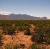 DESERT RANGE: