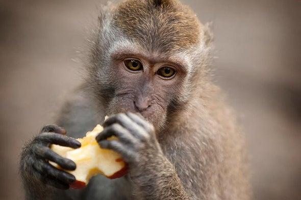 Monkeys Are Genetically Modified to Show Autism Symptoms
