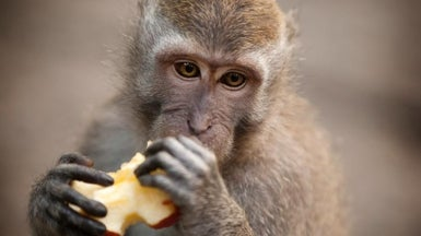 Monkeys Are Genetically Modified to Show Autism Symptoms