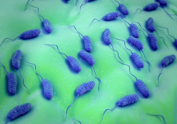 Deadly Bacteria Spread across Oceans as Water Temperatures Rise