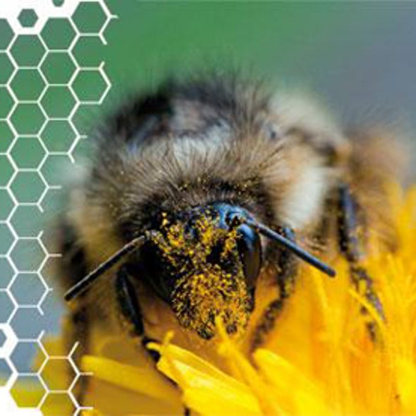 The Pollinator Crisis: What's Best for Bees?