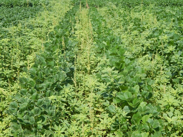 Weeds Are Winning the War against Herbicide Resistance