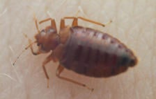 Don't Let the Bedbugs Bite: Pest Management Proves More Effective Than Pesticides
