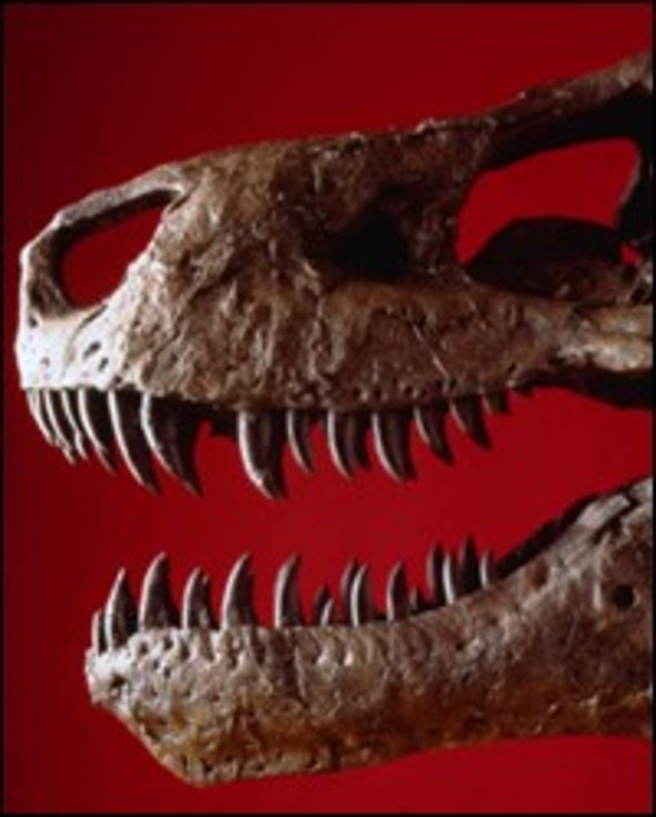 Growth Study Shows T. Rex Teens Would Have Been a Handful