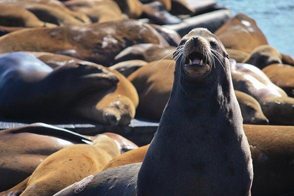 Banned Chemical Still Contaminating San Francisco Seals