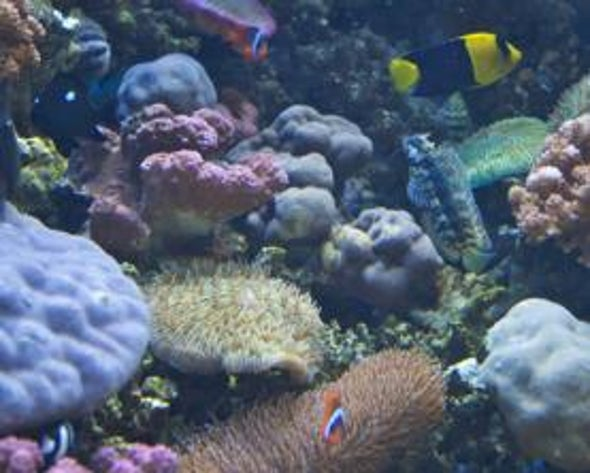 Petition Filed to Force EPA Regulation of Ocean Acid Levels