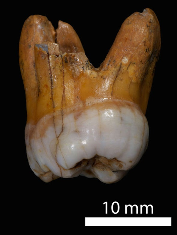 Mysterious Group of Extinct Humans Was More Diverse Than Neandertals