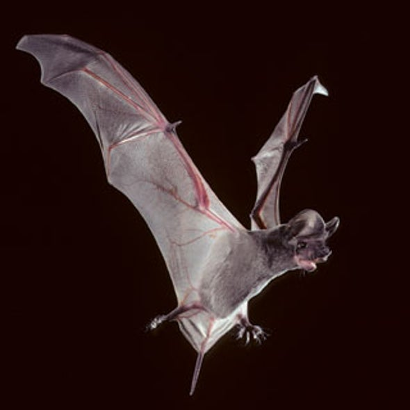 Winged Superlatives: The Ancient and Modern Diversity of Bats