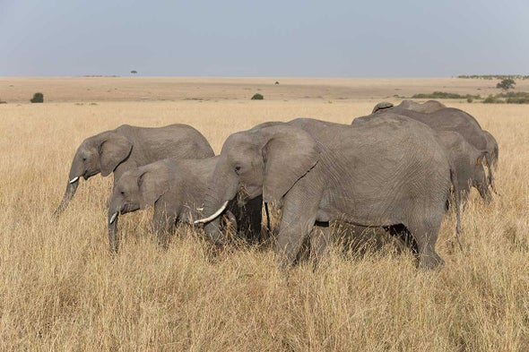 Elephant Daughters Step Up to Replace Murdered Mothers
