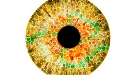 Lab-Grown Human Retinas Illuminate How Eyes Develop Color Vision