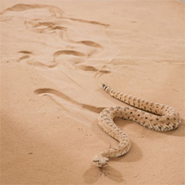 Move Over Rover: Snakebot Slithers Like a Sidewinder [Video]
