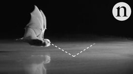 Smooth Surfaces Are a Bat Blind Spot