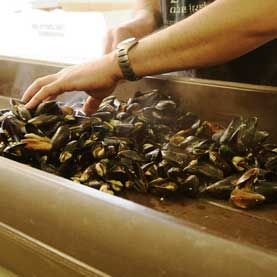 cooked mussels are sorted and prepped for the Mussel Eating Contest