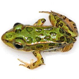 The Good and Bad News about Frog Abnormalities