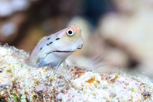 Tiny, Snackable Fish Are Linchpins of Coral Reef Ecosystems