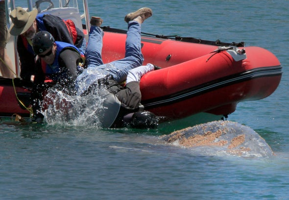 Ocean Heat Waves Linked to Rise in Whale Entanglements