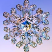 A REGAL SNOWFLAKE: