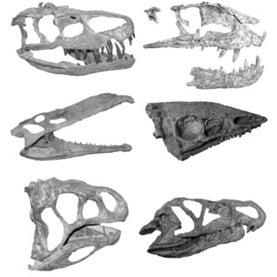 crurotarsans dinosaurs