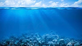 Coral Reefs Keep Costly Waves at Bay