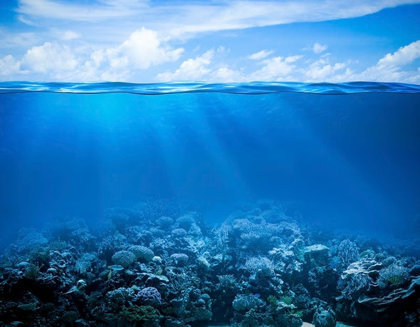 Coral Reefs Keep Costly Waves at Bay